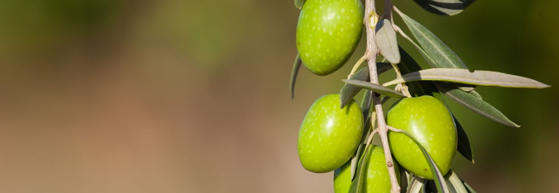 Sicilian Biological Extravirgin Olive Oil